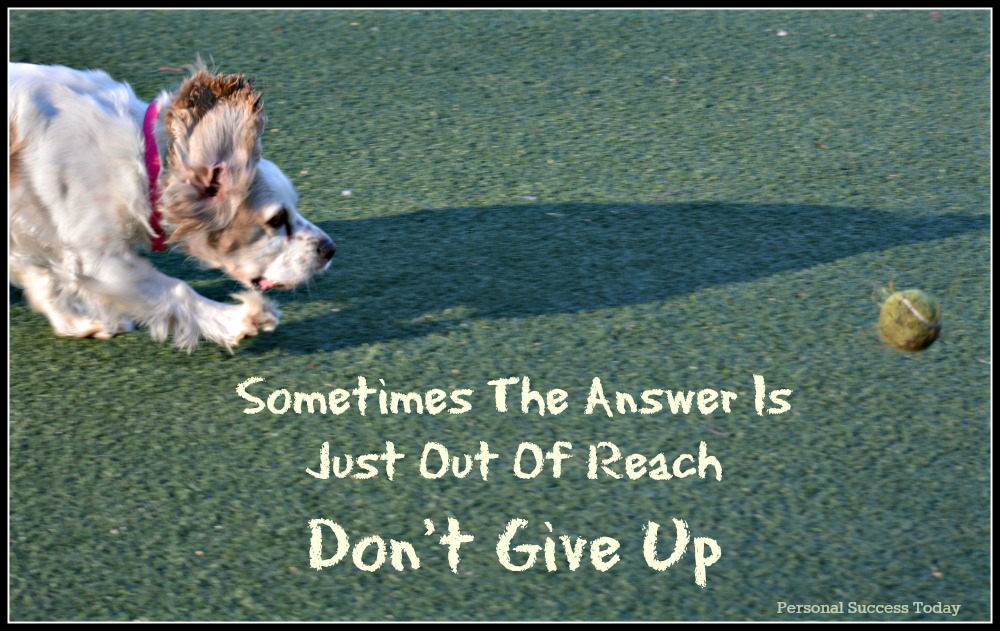 dog-quote-dont-give-up