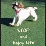 dog-success-quote-enjoy-life
