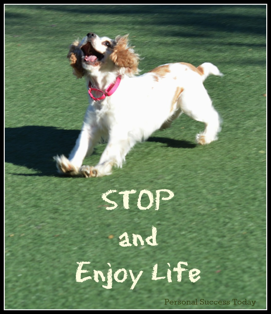 dog-success-quote-enjoy-life