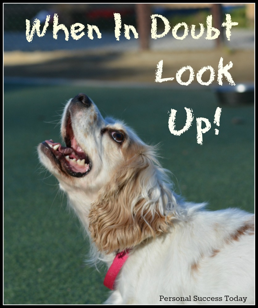 dog-quote-look-up